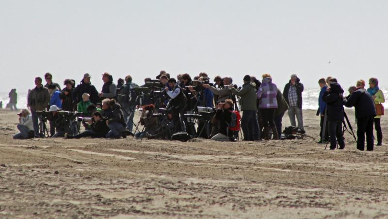 hordes meeuwenspotters op het strand van Egmond