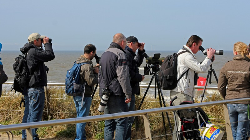 Bijzondere meeuw op strand van Egmond
