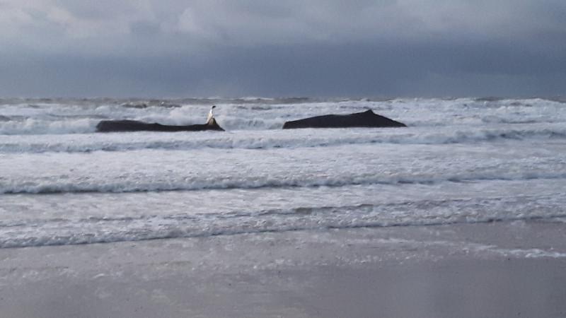 potvissen aangespoeld op strand texel