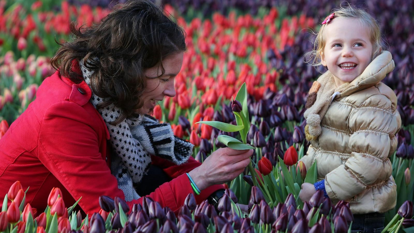 Tulpenplukdag