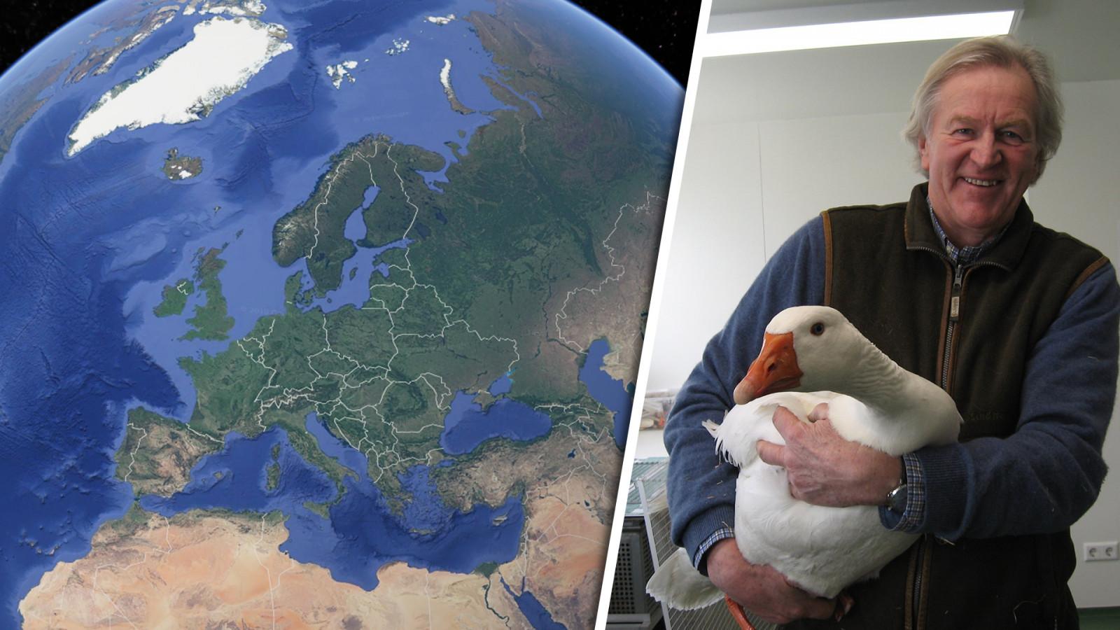 Verdwaalde gans via Google Earth herenigd met familie
