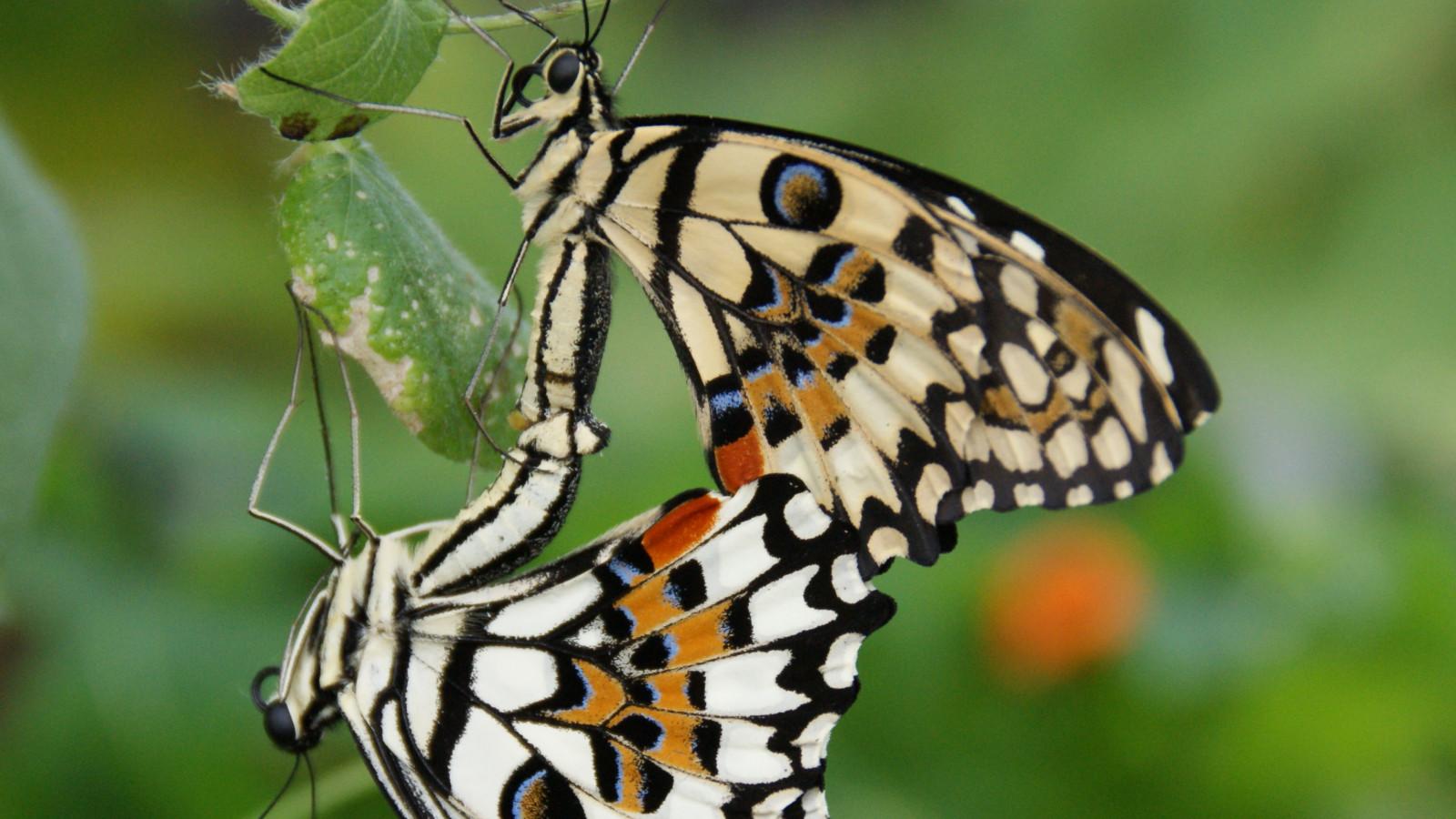 Vlindertuin Vlindorado