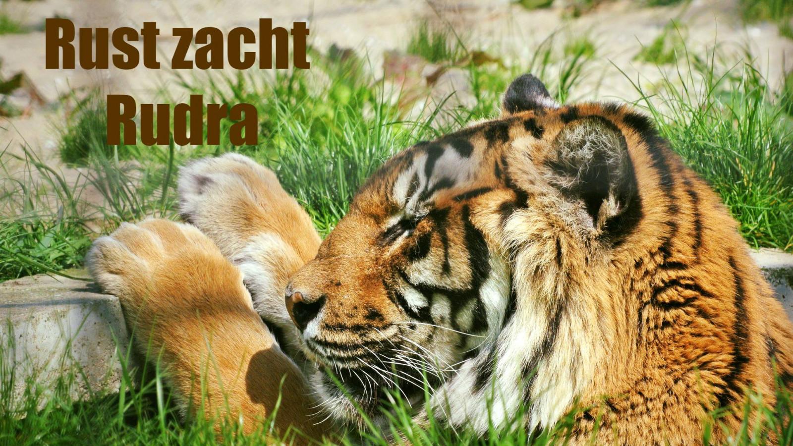 Stichting Leeuw
