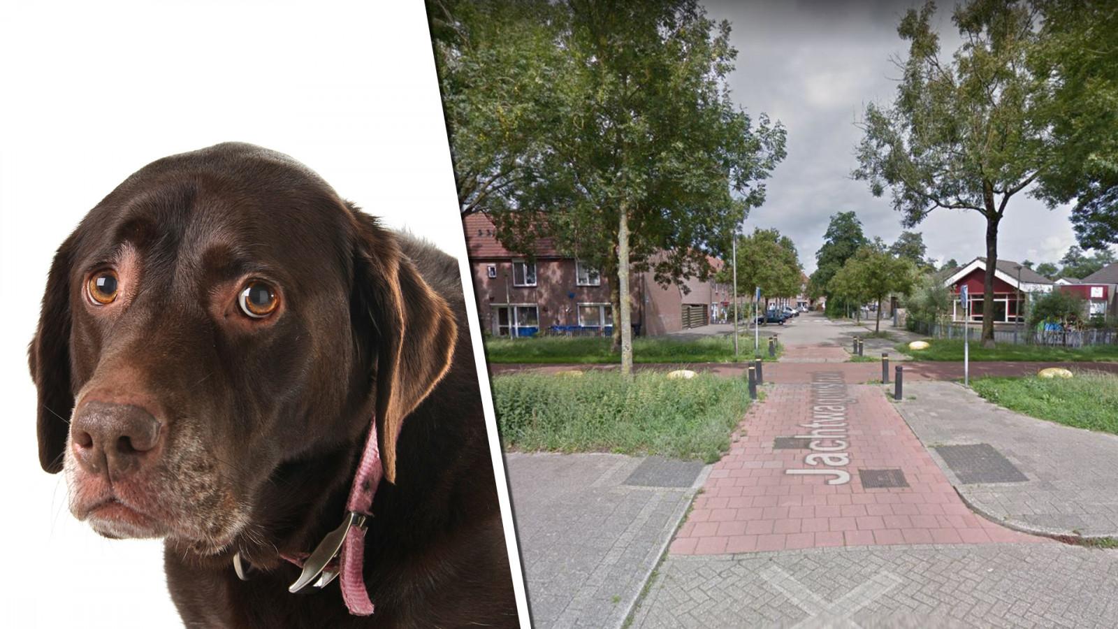 Google Maps/Adobe Stock (niet de daadwerkelijke hond uit het verhaal)