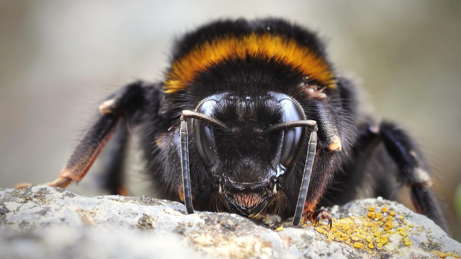 Primeur: speciale camera die insecten herkent in veenpolder geplaatst