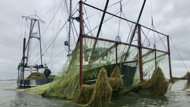 """Maaien waterplanten van start: """"Veel klachten maar opvallend weinig noodmeldingen"""""""