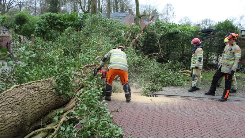 Boom op de weg Schapendrift in Blaricum