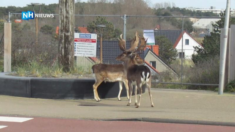 Herten kunnen na coronamaatregelen park Zandvoort niet meer in