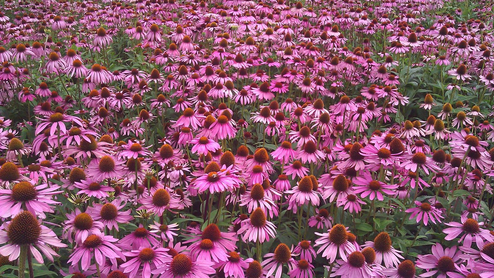 Botanische Tuin Alkmaar : Gemeente wil hortus voor alkmaar behouden nh nieuws
